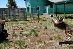 Cinder Hills Boarding Kennels pet care in Flagstaff, Arizona